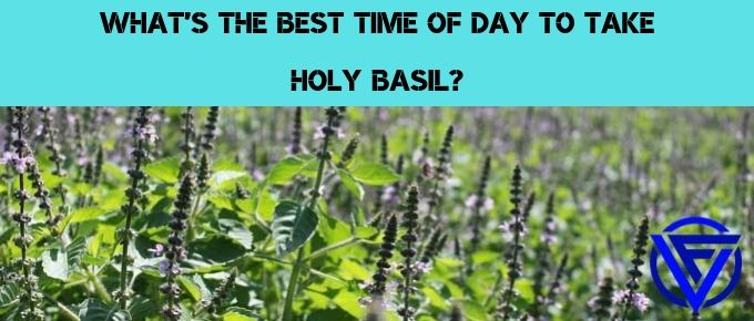 What's The Best Time Of Day To Take Holy Basil? (Our Verdict)