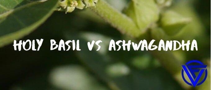 holy basil vs ashwagandha