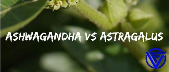 Ashwagandha vs Astragalus – Which One Should You Take?